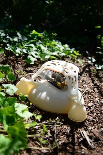 미국 하버드대와 UC샌디에이고 연구팀이 개발한 개구리 로봇의 모습.  - 하버드대 와이즈연구소 제공